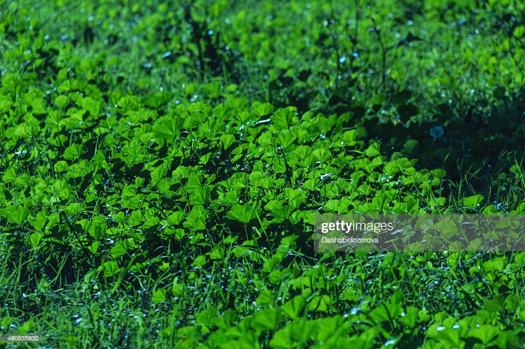 Green plant in sun : Stock Photo