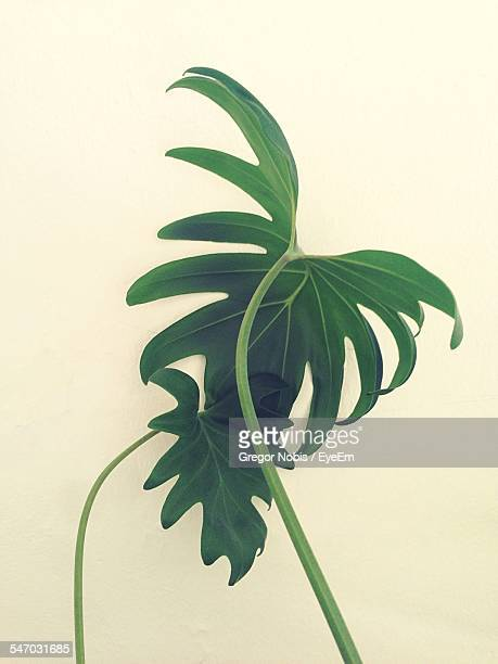 Green Plant Leaf On White Background