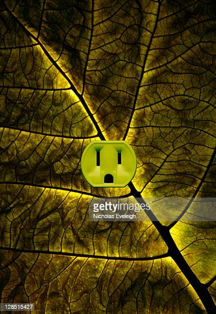Green plant leaf with an electrical outlet
