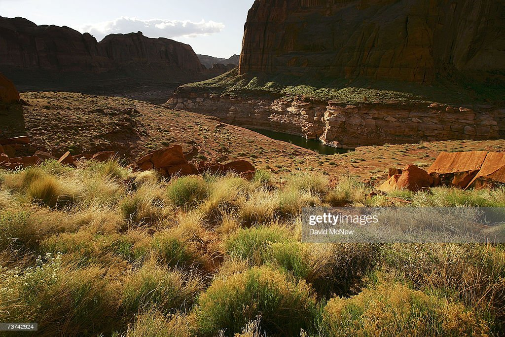 Green plant life flourishes among the red Navajo sandstone rock formations above the high water mark, where little grows in the whitened landscape, in Llewellyn Gulch canyon on March 27, 2007 near Page, Arizona. Lake Powell and the next biggest Colorado River reservoir, the nearly 100-year-old Lake Mead, are at the lowest levels ever recorded. Environmentalists have long-lamented the damming of scenic Glen Canyon, the eastern sibling of the Grand Canyon, in the early 1960's to create the 186-mile-long Lake Powell. The US Bureau of Reclamation is evaluating four proposals to manage the drought on the Colorado River which supplies water and power to millions of people in the western states. The bureau has warned that shortages are possible as early as 2010. If the water drops too far, power generators at the dams will become inoperable.