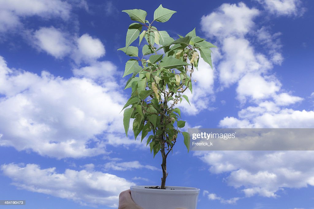 Green plant : Stock Photo