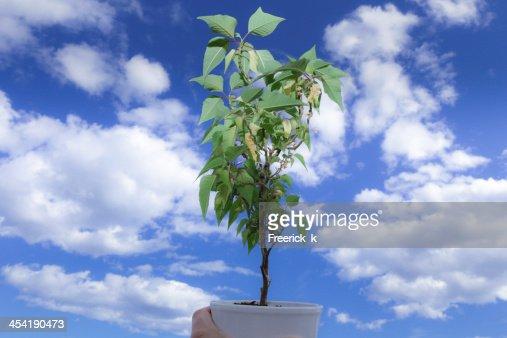 Green plant : Stock Photo
