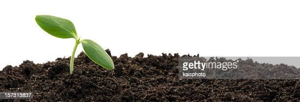 Plante de plus en plus du sol