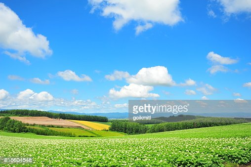 Green Plantation Fields : Stock Photo