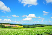 Green Plantation Fields