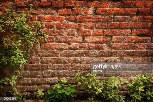 Des plantes vertes offrent le Vieux mur de briques