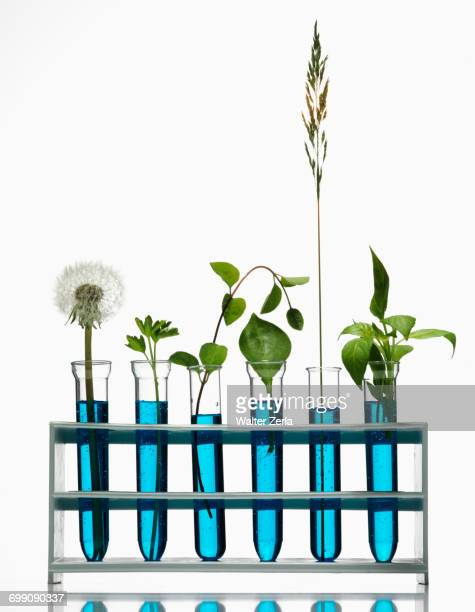 Green plants growing in blue liquids in test tubes