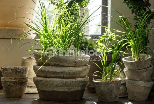 Des Plantes Vertes Dans Des Pots En Argile Ancienne Photo