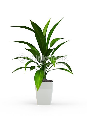 Green potted plant : Stock Photo