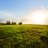 green prairie landscape at the evening