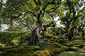 Green rainforest with old tree in thailand.