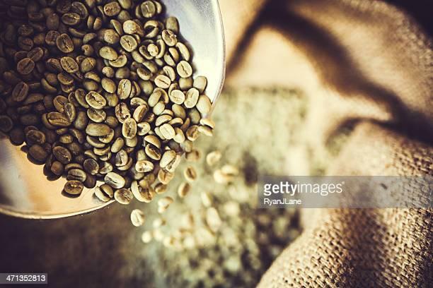 Green Raw Coffee Bean Crop
