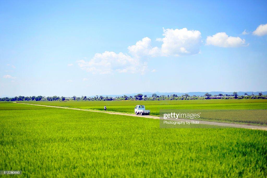 Green rice fields in northeastern Japan