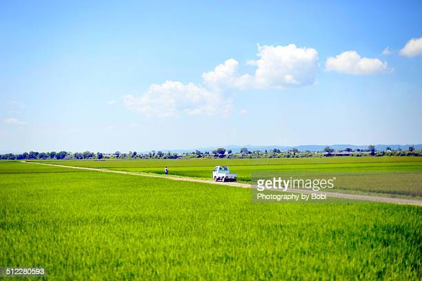 Green rice fields in northeastern Japan
