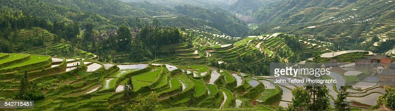 Green rice terraces on mountain slope.