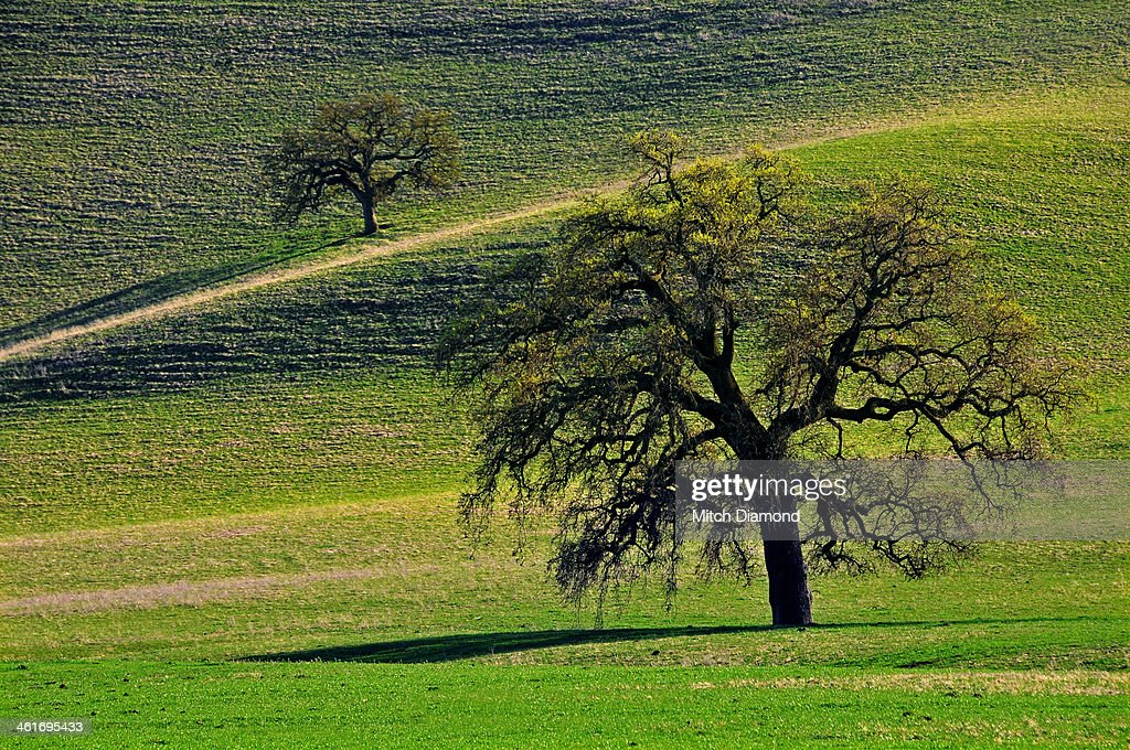 Green rolling hills of central California : Stock Photo