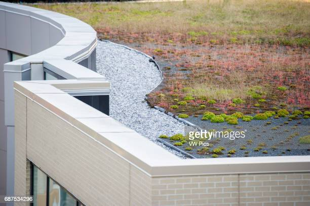 Green roof on a building in Rockville Maryland USA