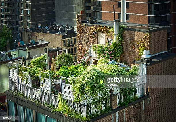 Green Rooftop in New York City
