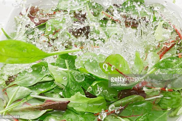 Green salad and spinach in water
