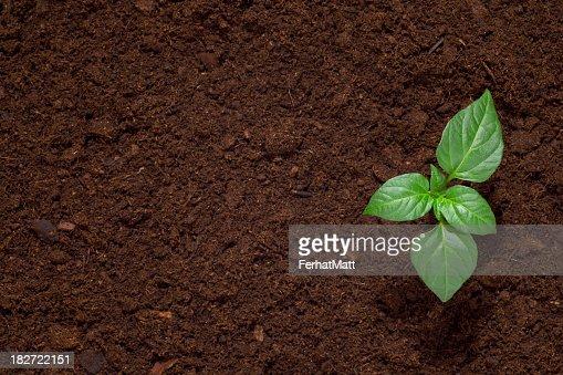 Green seedling sprout in dark dirt