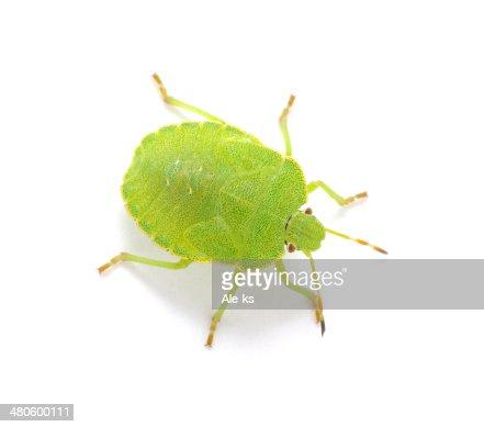 Green shield bug : Stock Photo