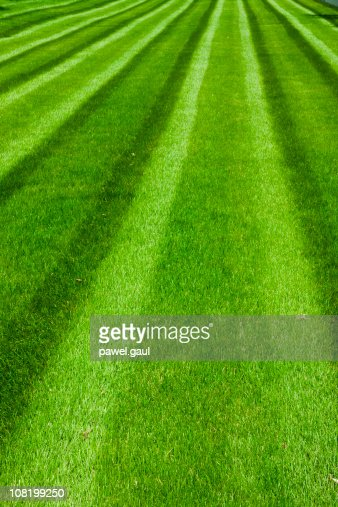 Green Soccer Field : Stock Photo