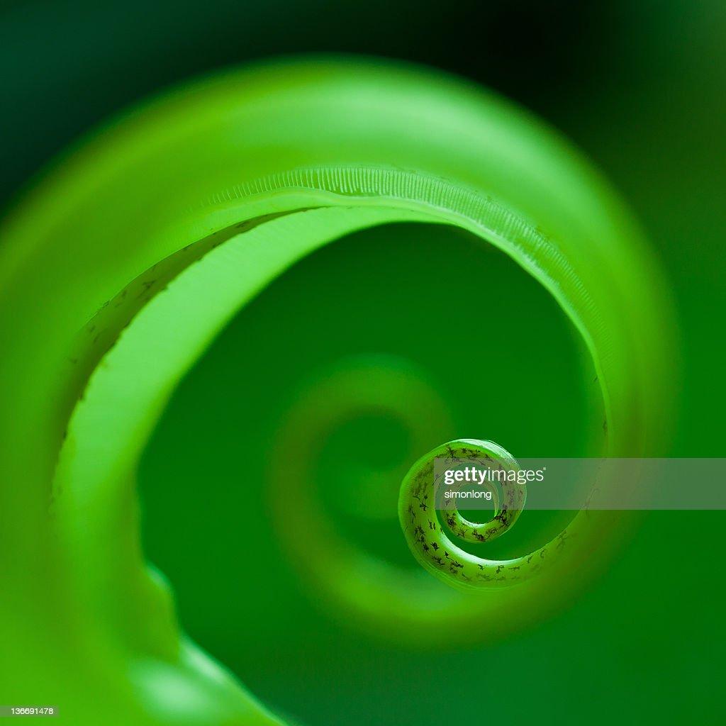 Green spiral design