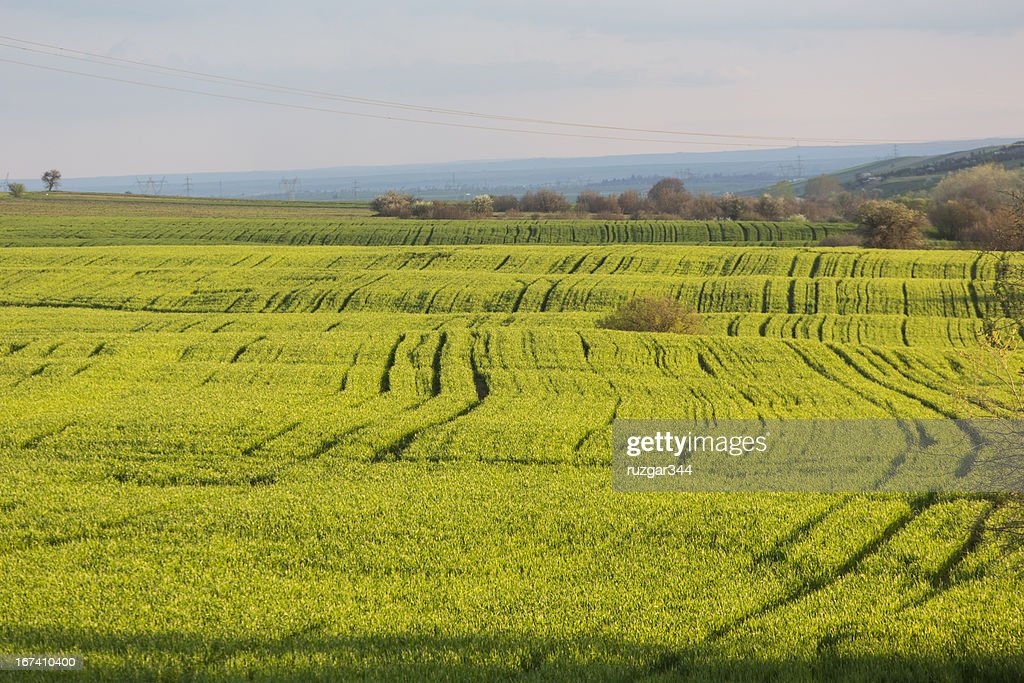 Green spring fields : Stock-Foto