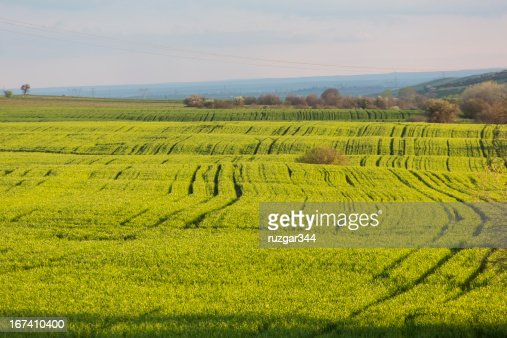 Green spring fields : Stock Photo