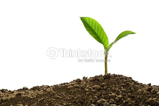 Green sprout growing out from soil isolated on white background : Stock Photo