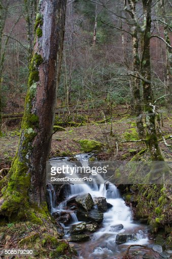 Green Stream : Stock Photo