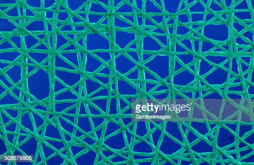 Green String Web : Stock Photo