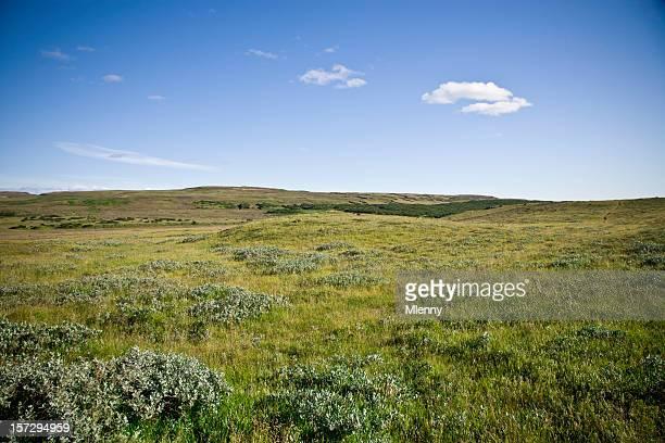 Grüne Sommer Landschaft