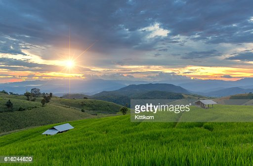 Green Terraced Rice Field in Pa Pong Pieng , Mae Chaem : Stock Photo