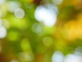 Tree, Forest, Treelined, Formal Garden, Plant