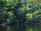 green tree in  forest and river