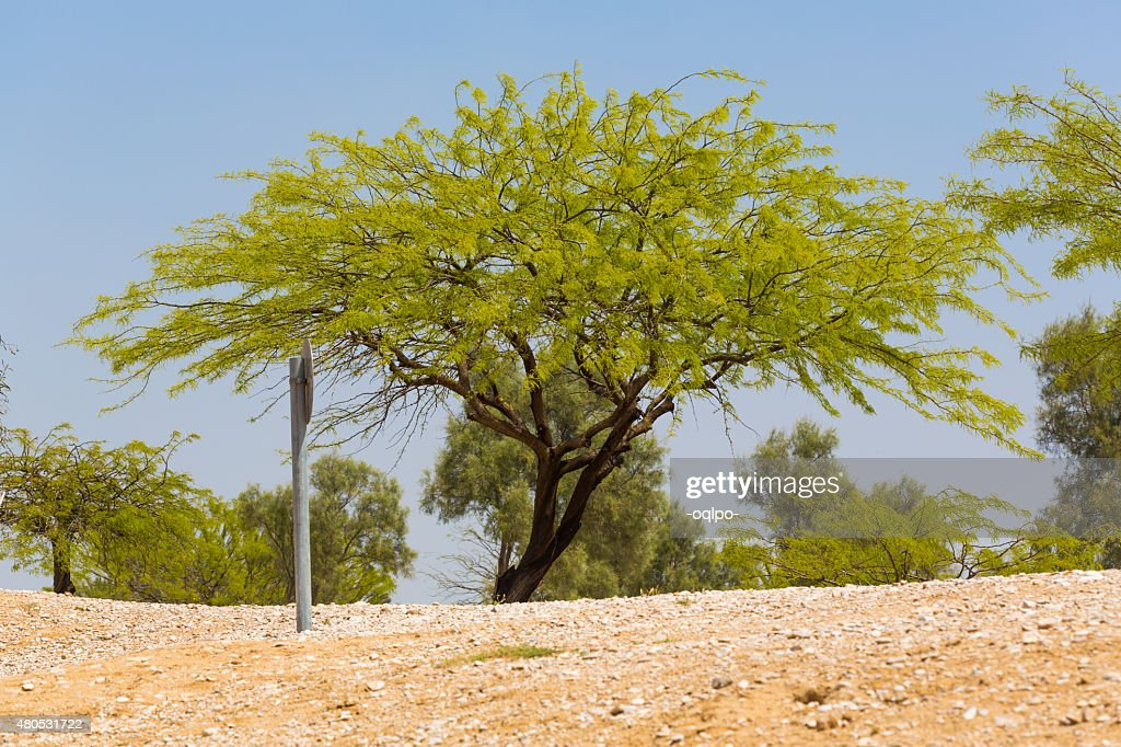 green tree : Stock Photo