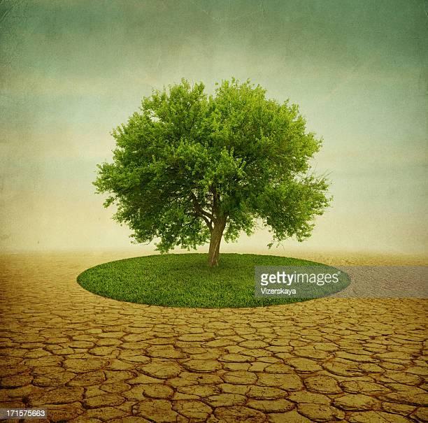 グリーンツリー、砂漠の草原