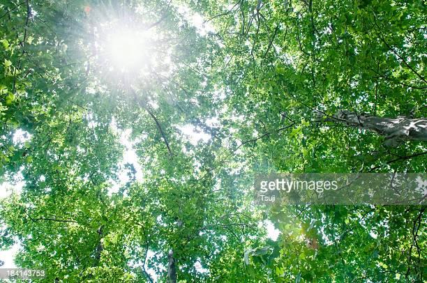 Grüner Baum mit Sonne flare