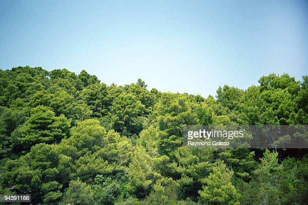 Green trees against blue sky