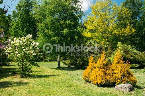 Vert Arbres Et Buissons Dans Le Jardin Design De Jardin Photo ...