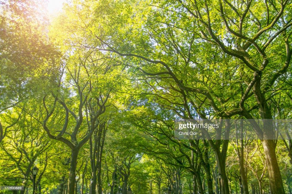 Green treetops in park : Stock Photo