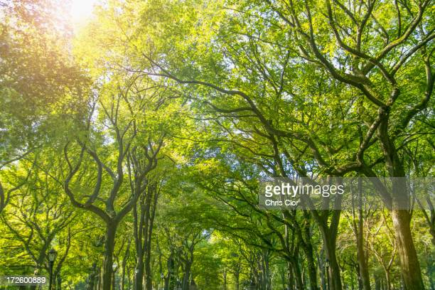 Green treetops in park