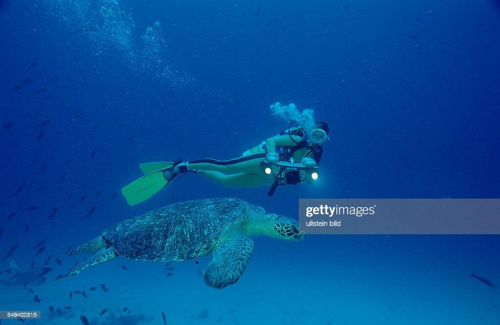 Green Turtle and Scuba diver, Chelonia mydas, Costa Rica, Pacific Ocean, Cocos Island, Latin america