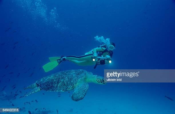 Green Turtle and Scuba diver Chelonia mydas Costa Rica Pacific Ocean Cocos Island Latin america