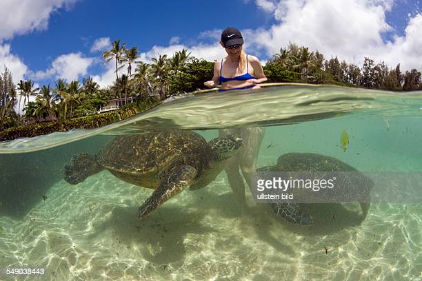 Green Turtles and Tourist Chelonia mydas Oahu Pacific Ocean Hawaii USA