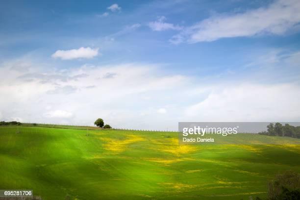 Green Tuscan Landscape