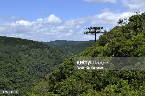 Green valley : Foto de stock