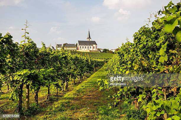 Green vineyard with church in Germany