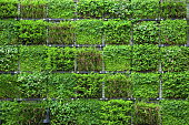 Ecology, Vertical Garden, Wall, Building Feature, Green Color, Plant, Architecture
